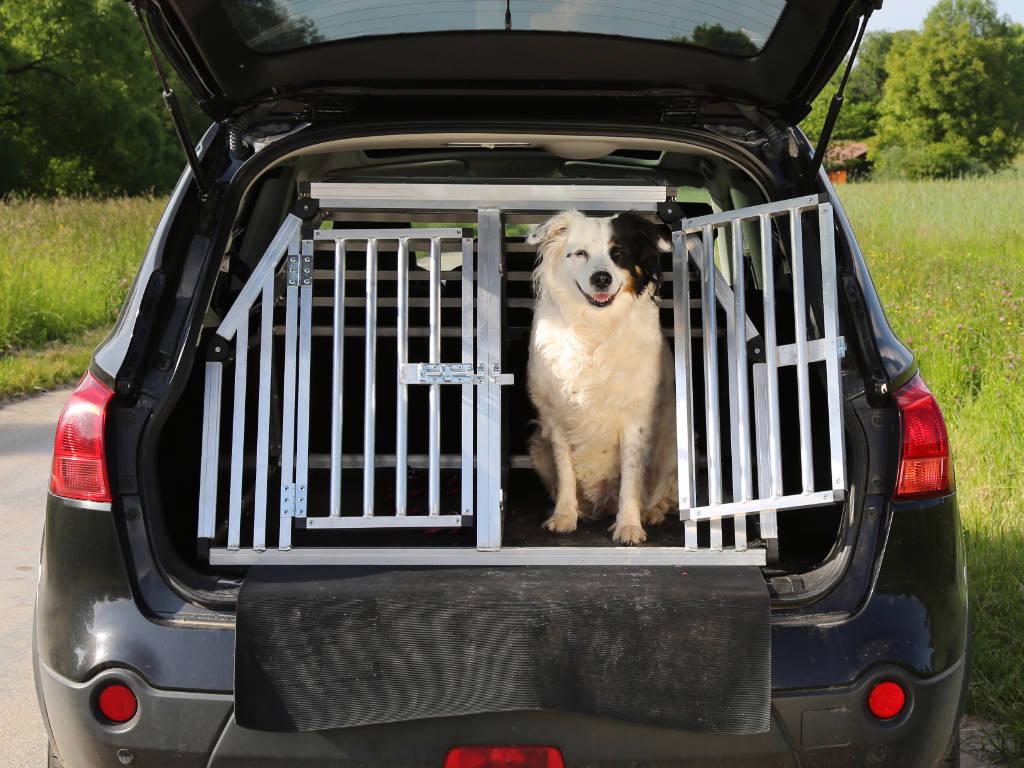 Transporte de Pets - Taxi Dog