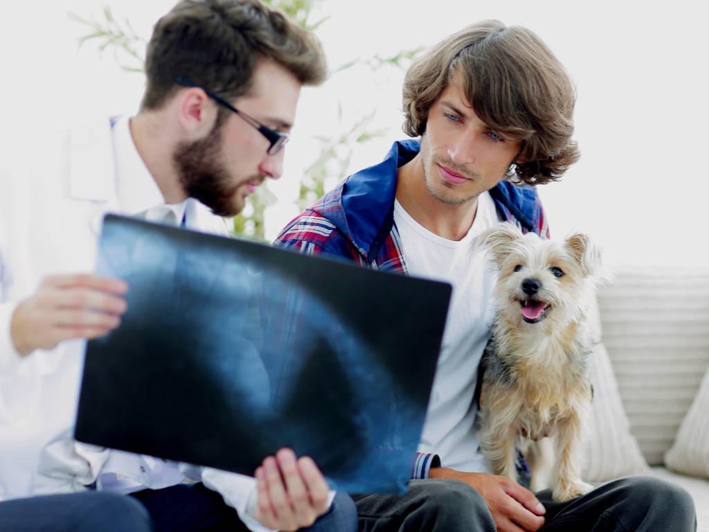 Sabemos que um bom relacionamento com tutores e clientes é fundamental para o sucesso de seu negócio veterinário, certo?  Muito mais do que conquistar novos clientes, saber manter um relacionamento duradouro…