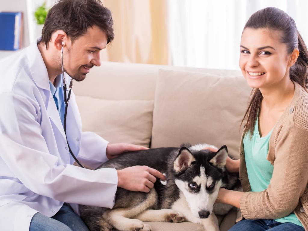 Enquanto a crise de saúde referente a pandemia de Corona vírus atinge o pico em nosso país, muitos negócios estão sendo prejudicadas (inclusive as clínicas veterinárias). Afinal, as pessoas estão…