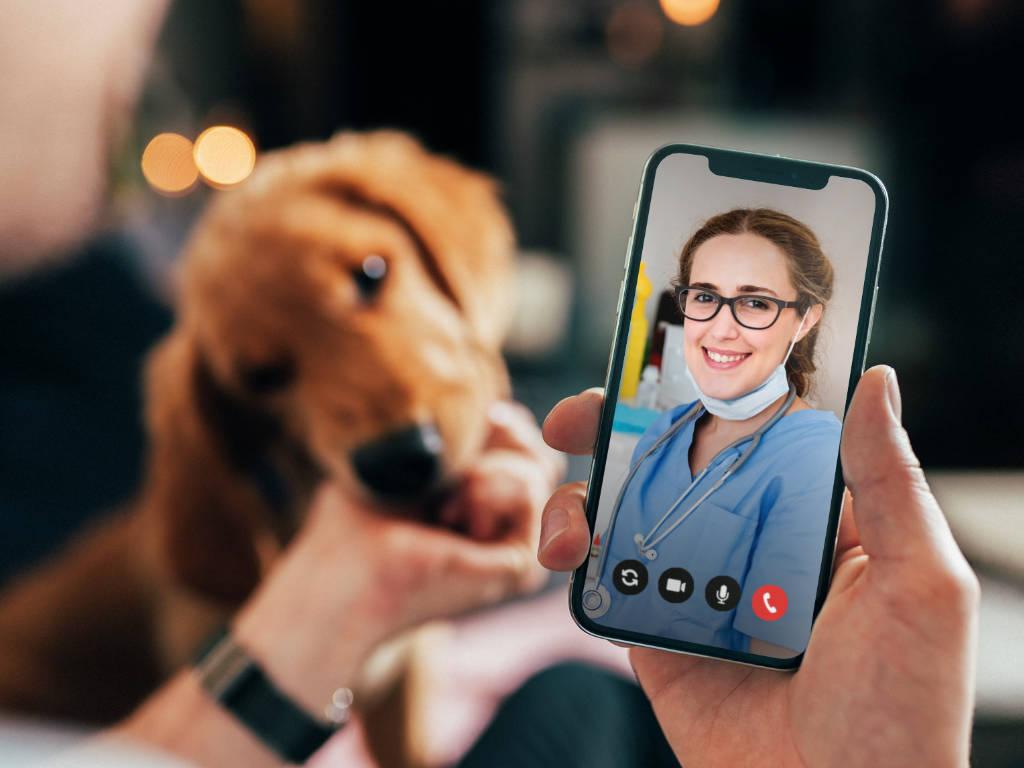 O pós-venda é um serviço essencial em qualquer empresa, mas se torna ainda mais importante quando falamos de um negócio veterinário.  Isso acontece porque o atendimento é critério com maior avaliação…