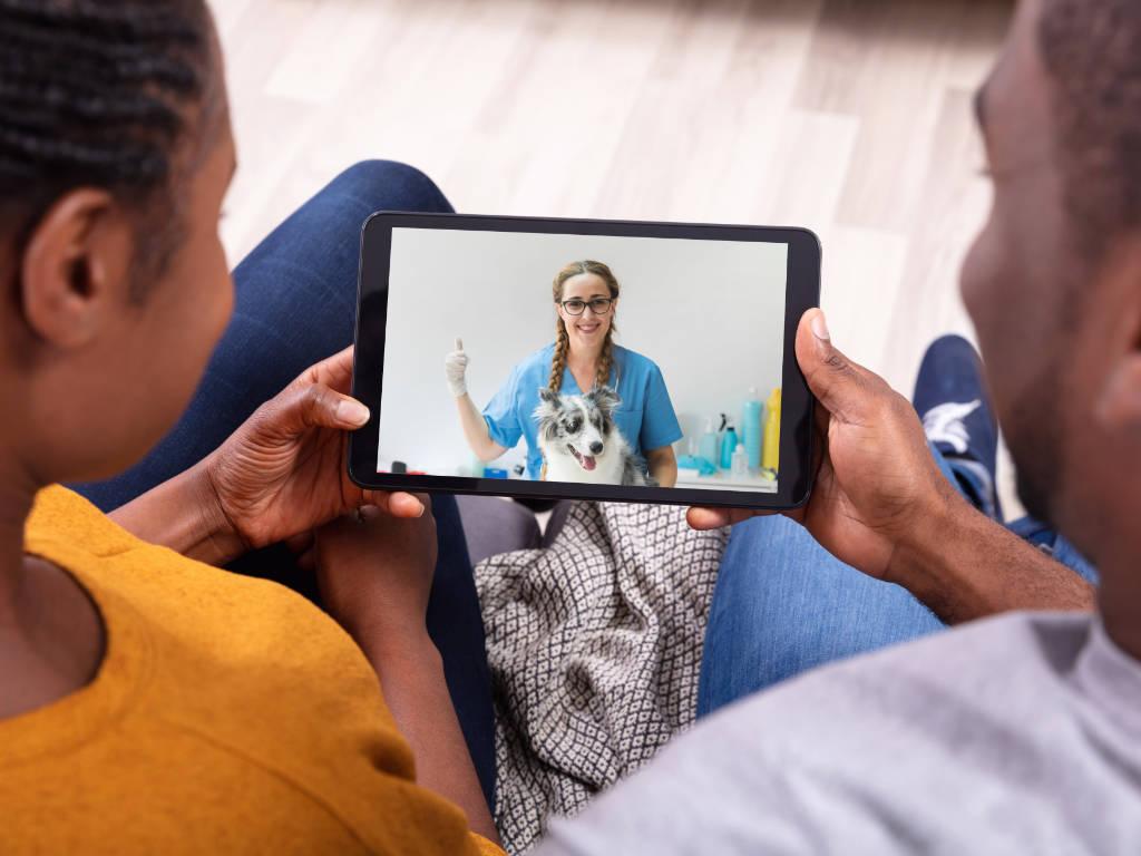 O avanço tecnológico proporcionou diversas mudanças no relacionamento entre as empresas veterinárias e seus clientes.  Com o advento da internet e ampliação do acesso online, ficou muito mais fácil manter os…