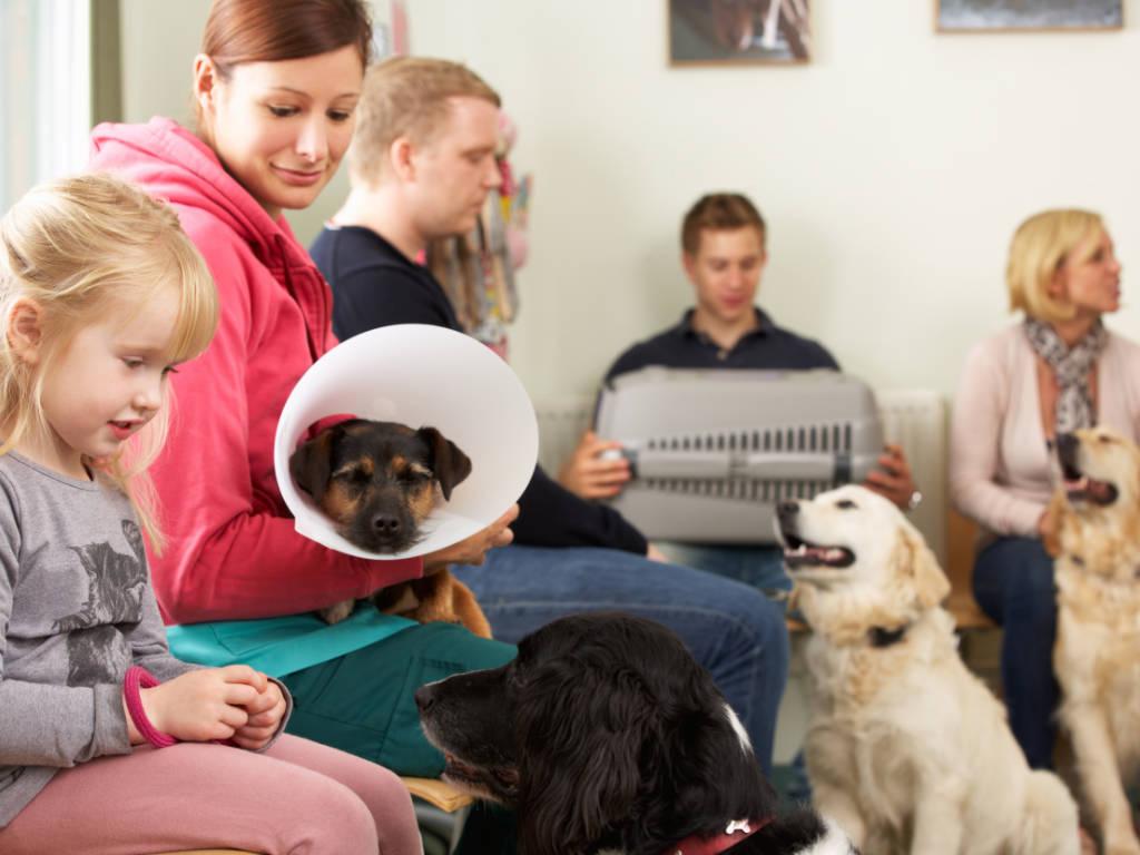 Todo empreendedor da área veterinária deve saber aproveitar os períodos do ano que podem gerar um gatilho para que os tutores levem seus animais de estimação ao atendimento veterinário.  Estes períodos…