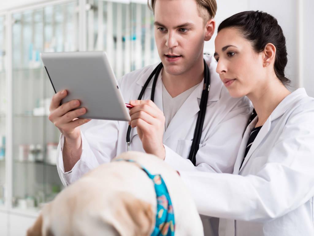 Com a expansão da demanda por atendimento nas clínicas e hospitais veterinários, é fundamental contar com facilitadores para garantir excelência no relacionamento com os clientes e na sua gestão, não…